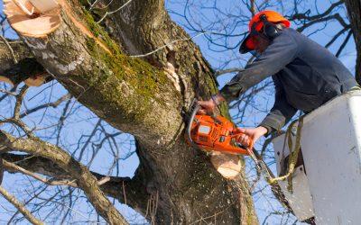 10% Off Tree Service